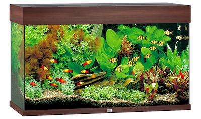 JUWEL AQUARIEN Aquarium »Rio 125 LED«, 125 Liter, BxTxH: 81x36x50 cm, in versch. Farben kaufen