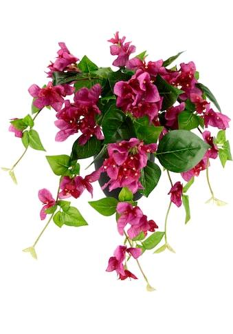 I.GE.A. Kunstpflanze »Bougainvillea« (1 Stück) kaufen