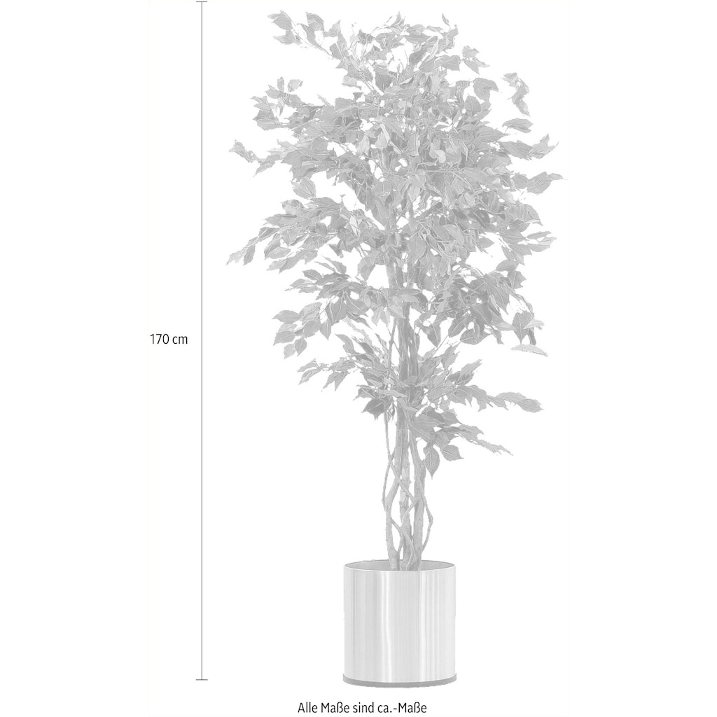 Schneider Kunstpflanze »Ficus Benjamini«