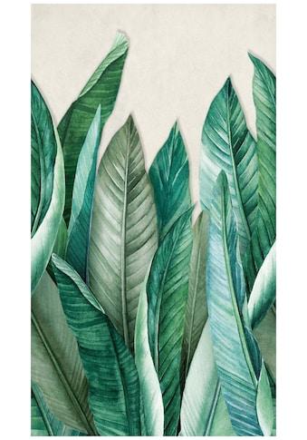 Bodenmeister Fototapete »Bananenblätter Dschungel grün« kaufen