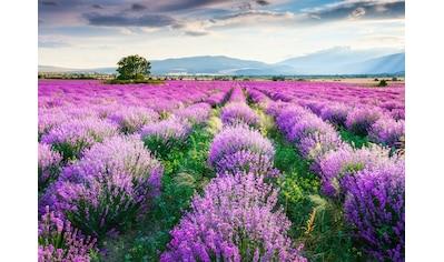 Papermoon Fototapete »Lavende Garden« kaufen