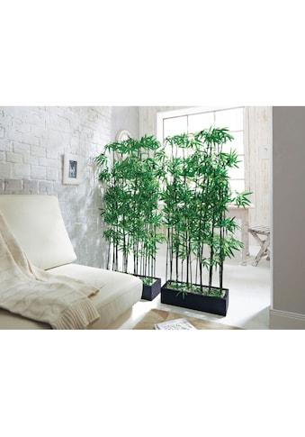 Schneider Künstliche Zimmerpflanze, Maße (B/T/H): 20/50/140 cm kaufen
