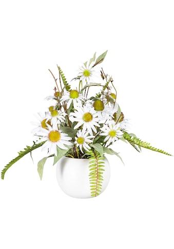 DELAVITA Künstliche Zimmerpflanze »Elwine«, im Keramiktopf kaufen