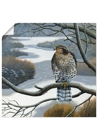 Artland Wandbild »Falke im Baum« kaufen