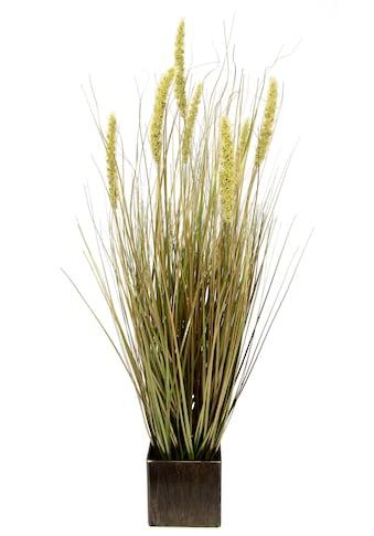 I.GE.A. Kunstpflanze »Fuchsschwanzgras«, Im Topf kaufen