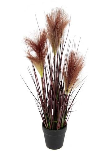 I.GE.A. Kunstpflanze »Pampasgras«, Im Topf kaufen