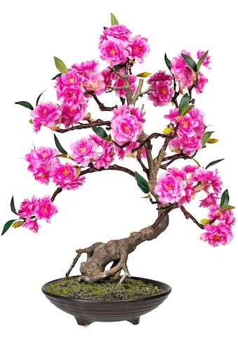 DELAVITA Kunstbonsai »Margarete« kaufen
