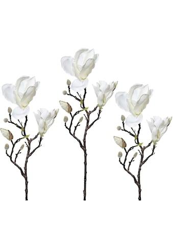 Creativ green Kunstzweig »Magnolie« kaufen