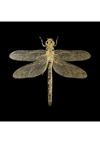 Leonique Acrylglasbild »Libelle« kaufen