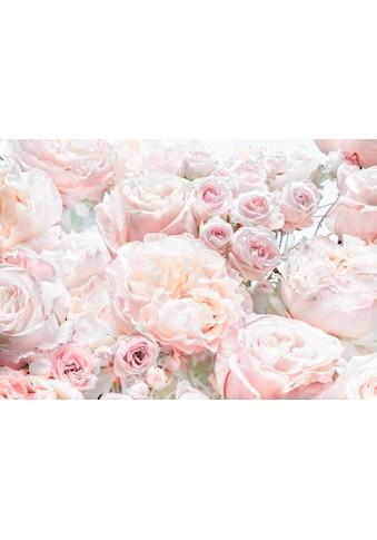 KOMAR Set: Fototapete »Spring Roses«, Ausgezeichnet lichtbeständig kaufen