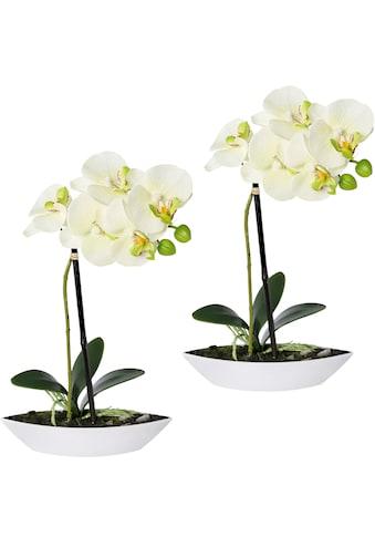 Creativ green Kunstorchidee »Phalaenopsis«, 2er Set, in Kunststoffschale kaufen