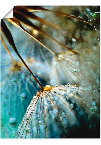 Artland Wandbild »Pusteblume Mystische Schönheit«, Blumen, (1 St.), in vielen Größen &... kaufen