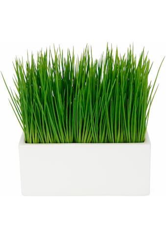 I.GE.A. Kunstpflanze »Gras«, in Keramikschale kaufen