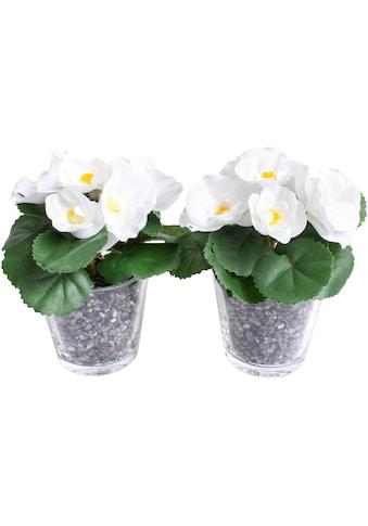 Botanic-Haus Kunstblume »Frühlingsblume« kaufen