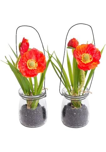 Botanic-Haus Kunstblume »Mohnblume im Glas« kaufen