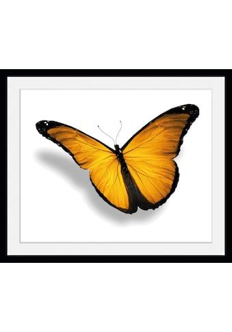 queence Bild »Maria 2.0«, Schmetterlinge, (1 St.) kaufen