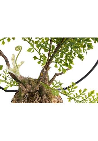 Botanic-Haus Künstliche Zimmerpflanze »Farn im Metallbogen« kaufen