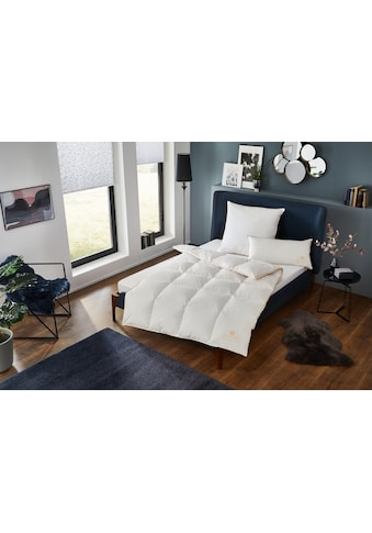 Royal Bed Polster, OBB (1tlg.) kaufen