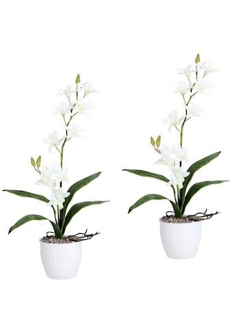 Creativ green Kunstpflanze »Orchidee Dendrobie«, im Keramiktopf kaufen