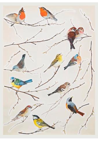 Komar Wandtattoo »Vögel«, selbstklebend kaufen