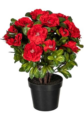 DELAVITA Künstliche Zimmerpflanze »Wolga« kaufen