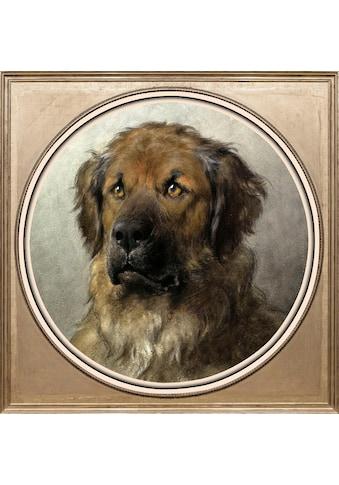 queence Acrylglasbild »Jagdhund« kaufen
