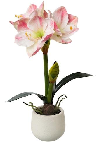my home Kunstblume »Amaryllis« (1 Stück) kaufen