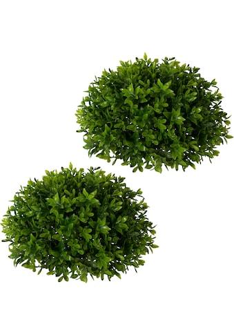 Creativ green Kunstpflanze »Buchsbaumhalbkugel«, 2er Set kaufen