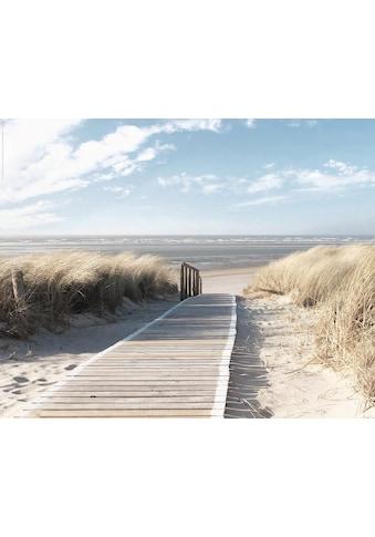 Deco-Panel »Nordsee Dünen« kaufen
