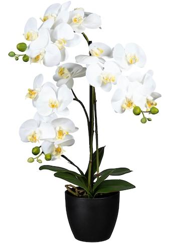 Creativ green Kunstorchidee »Phalaenopsis« kaufen