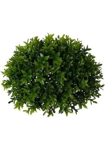 Creativ green Kunstpflanze »Buchsbaumhalbkugel« kaufen