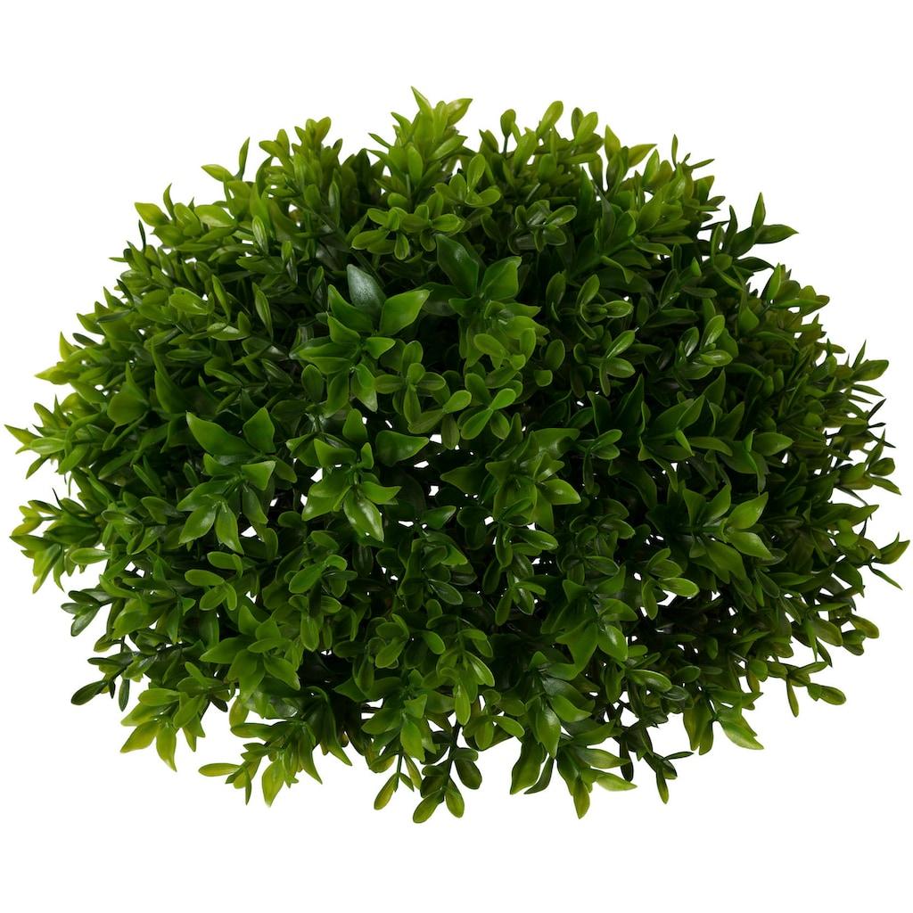 Creativ green Kunstpflanze »Buchsbaumhalbkugel«