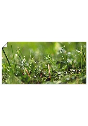 Artland Wandbild »Tautropfen«, Gräser, (1 St.), in vielen Größen & Produktarten -... kaufen