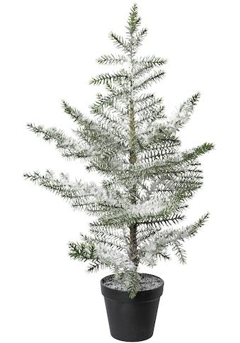 """Tannenbaum """"Zimmertanne im Topf"""" kaufen"""