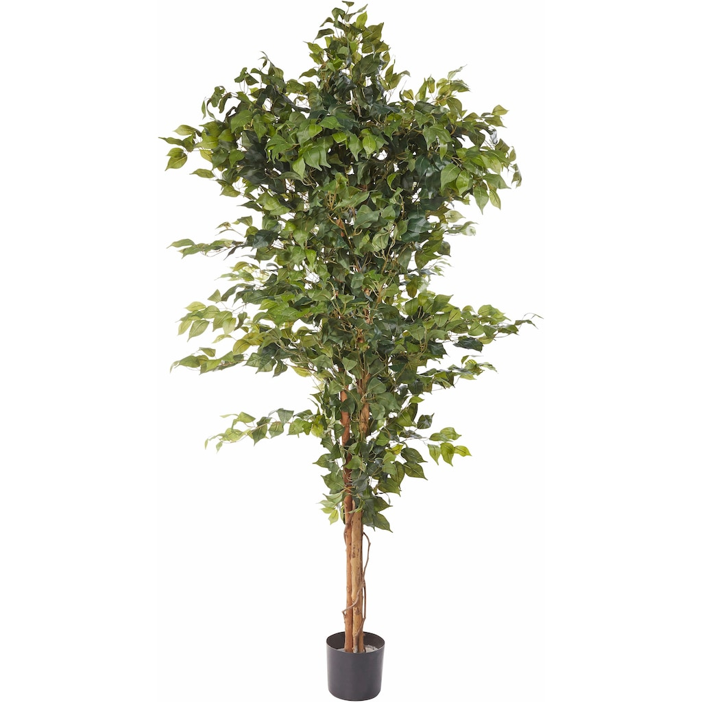 Creativ green Kunstpflanze »Ficus Benjamini«