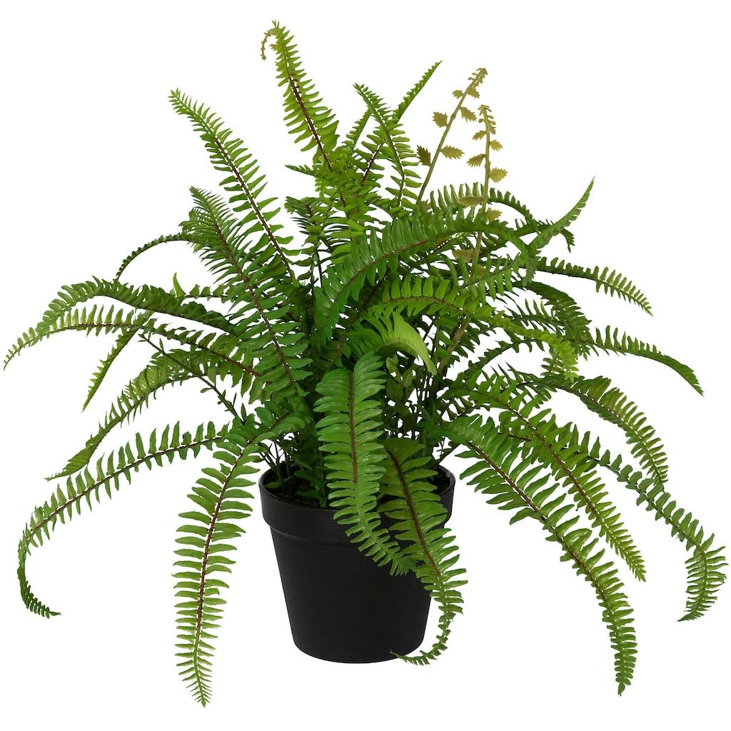 Creativ green Kunstpflanze »Nephrolepisfarn«, im Kunststofftopf