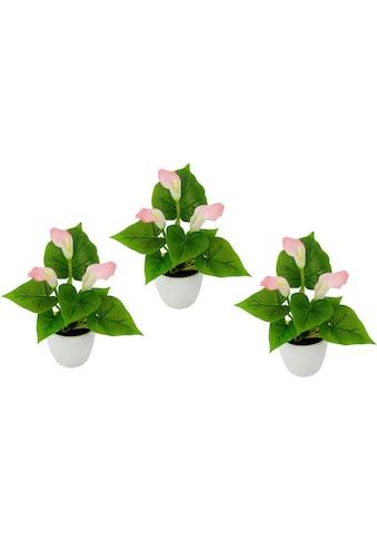 I.GE.A. Kunstpflanze »Mini Calla« kaufen