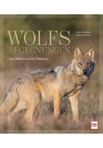 Buch »Wolfsbegegnungen / Anke Benstem, Jürgen Borris« kaufen