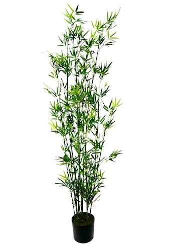 I.GE.A. Kunstpflanze »Bambus im Topf« kaufen