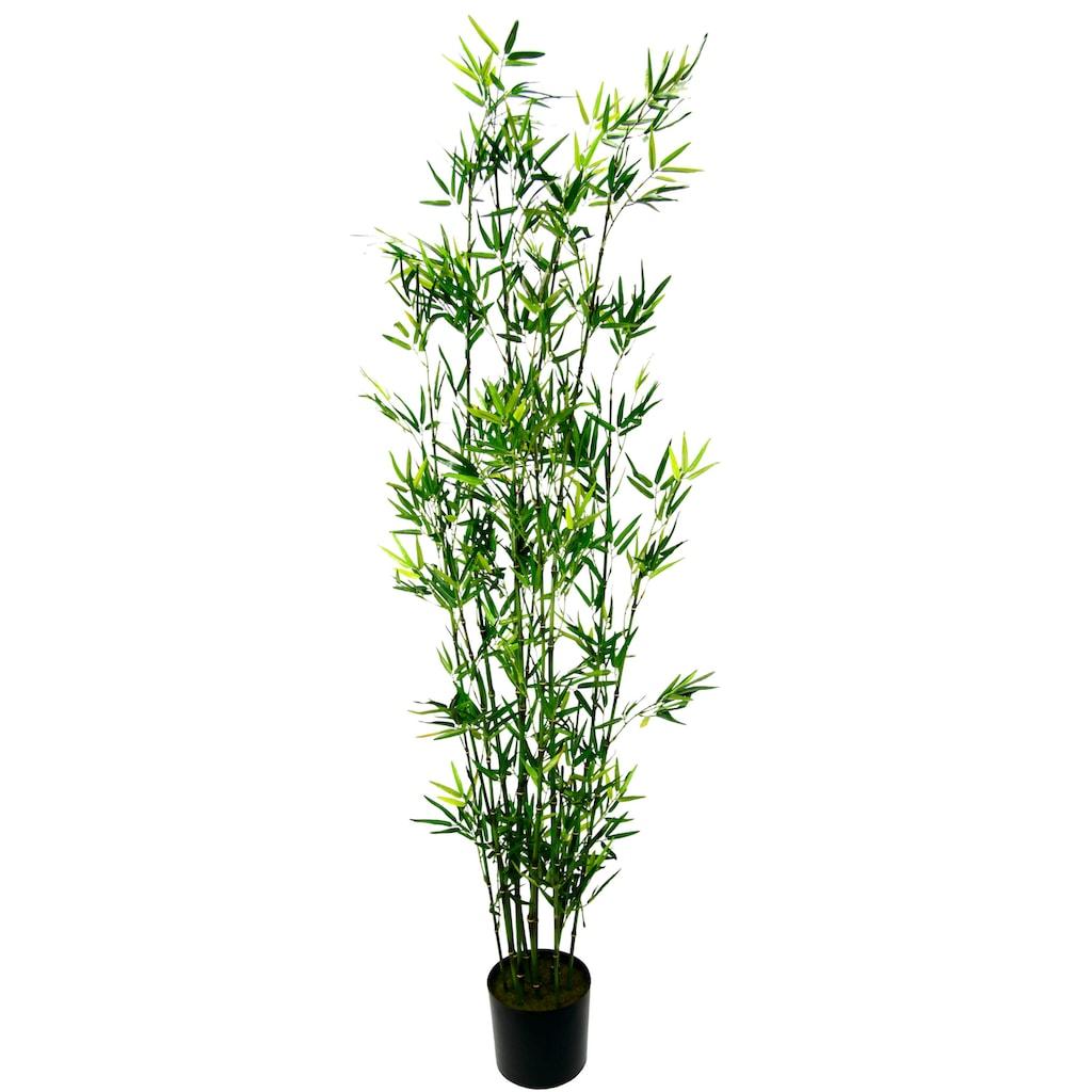 I.GE.A. Kunstpflanze »Bambus im Topf«