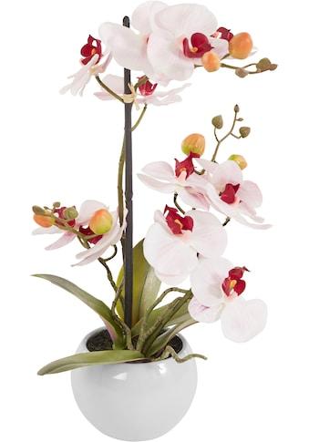 DELAVITA Kunstorchidee »Ernestine«, im Keramiktopf kaufen