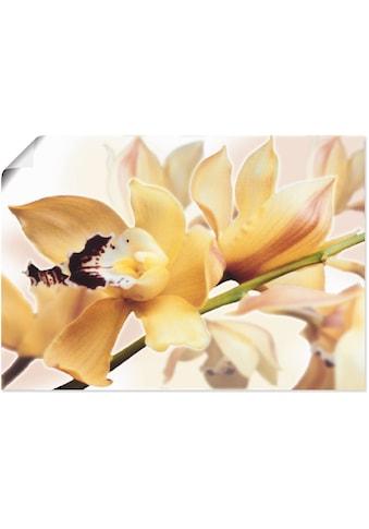 Artland Wandbild »Gelbe Orchidee«, Blumenbilder, (1 St.), in vielen Größen &... kaufen