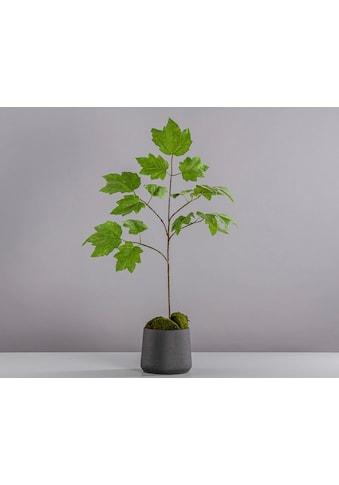 Blütenwerk Künstliche Zimmerpflanze »Ahorn« kaufen