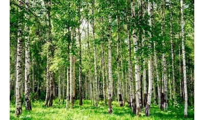 PAPERMOON Fototapete »Birch Forest«, BlueBack, 7 Bahnen, 350 x 260 cm kaufen