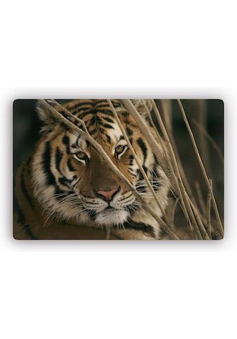 Wall-Art Glasbild »Tiger«, 60/40 cm oder 100/70 cm kaufen