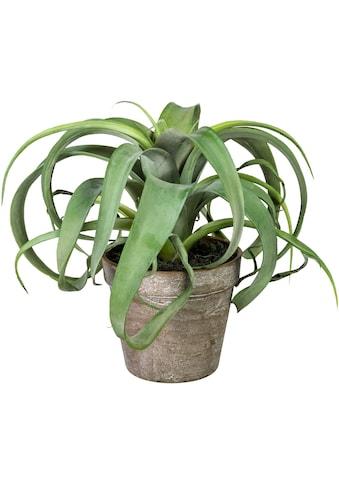 Home affaire Künstliche Zimmerpflanze »Finegand« kaufen