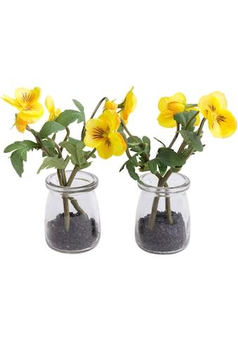 Botanic-Haus Kunstblume »Horveilchen« kaufen