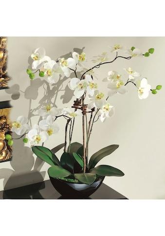 Schneider Kunstorchidee kaufen
