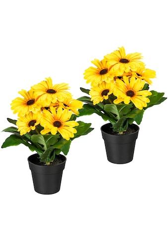 my home Künstliche Zimmerpflanze »Elaine«, 2er Set kaufen