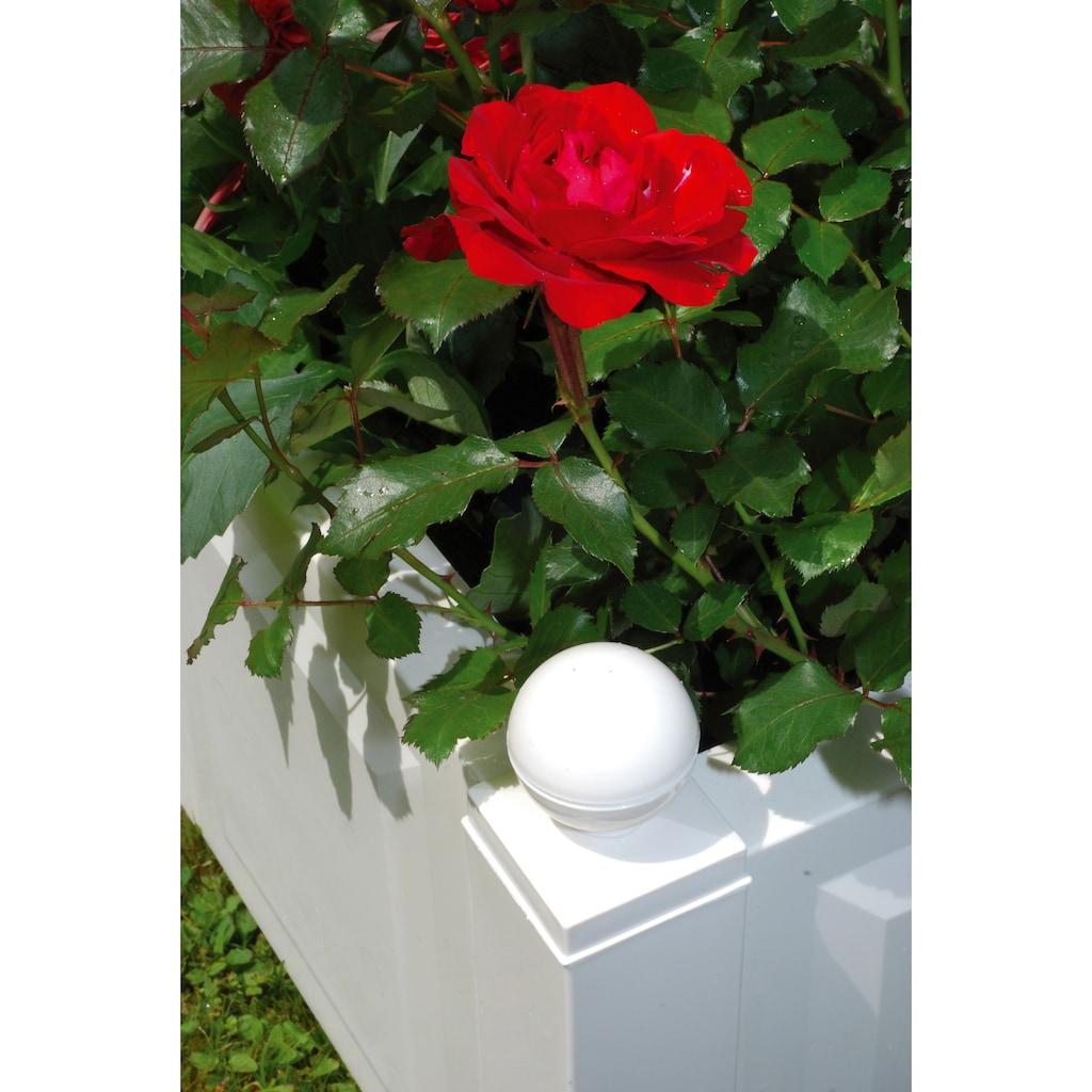 Spalier »mit Pflanzkasten, 43 cm weiß«